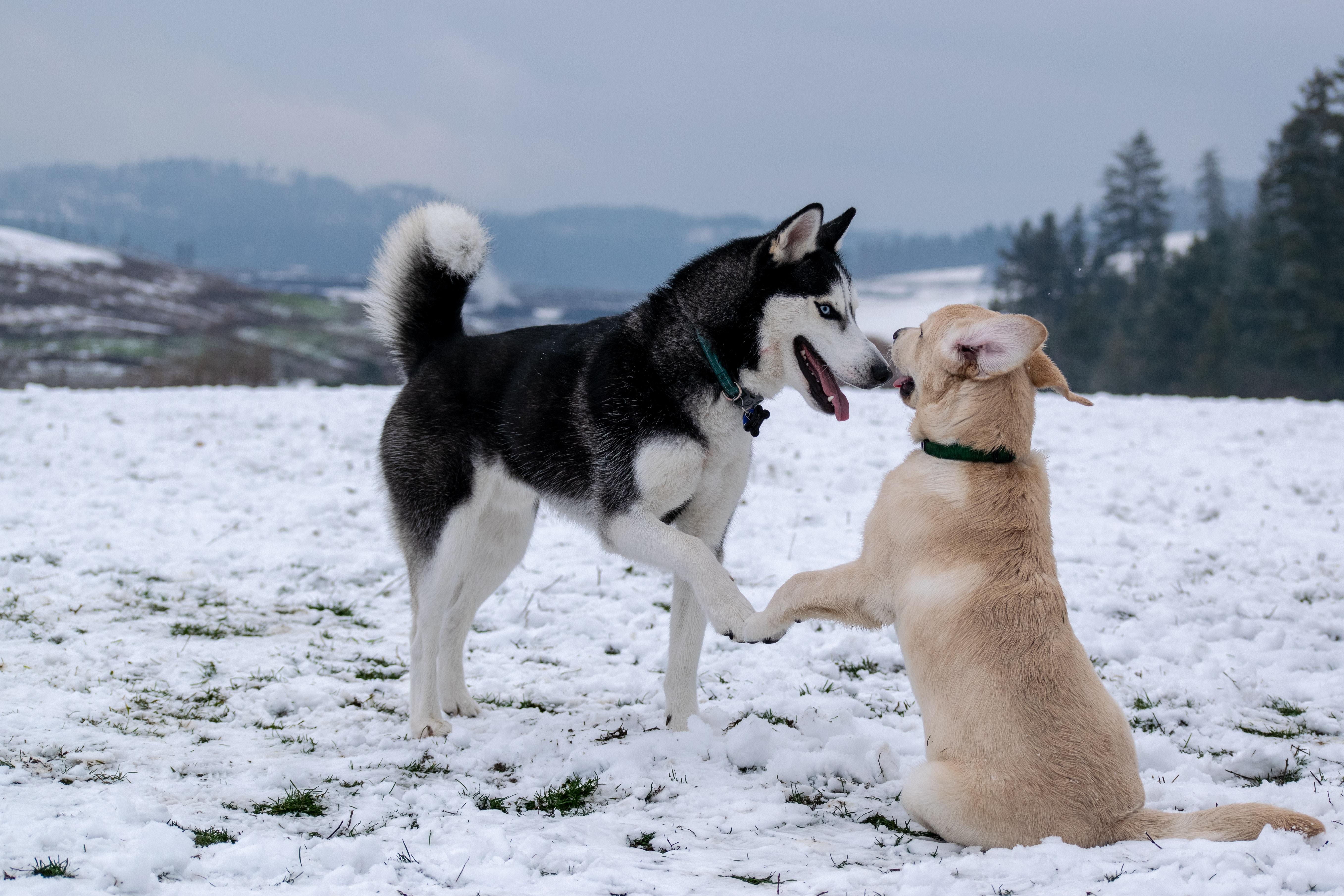 Understand Your Dog When They Meet Their Friends!